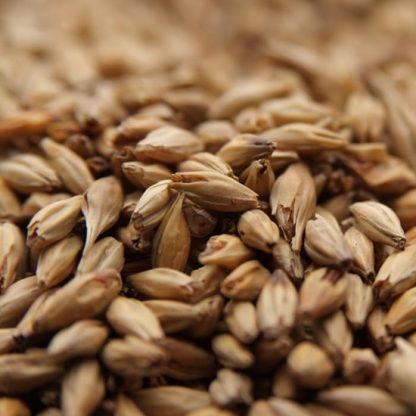 Weyerman CaraAmber Malt Grains Close Up