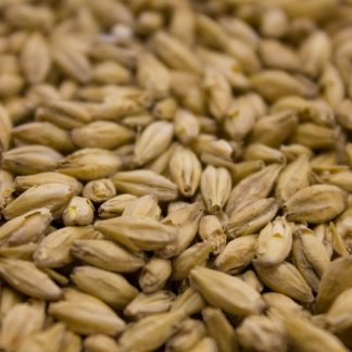 Weyerman Eraclea Pilsner Malt Grains Close Up