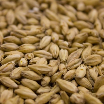 Weyerman Eraclea Pilsner Malt Grains Close Up