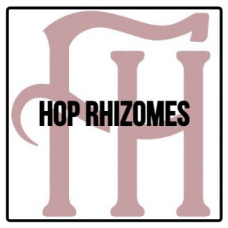 Hop Rhizomes
