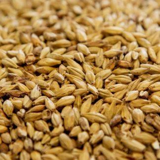 Aromatic Malt Grains Close Up