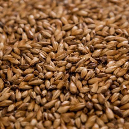 Cara 45 Malt Grains Close Up