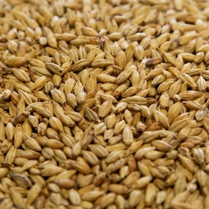 Munich Malt Grains Close Up