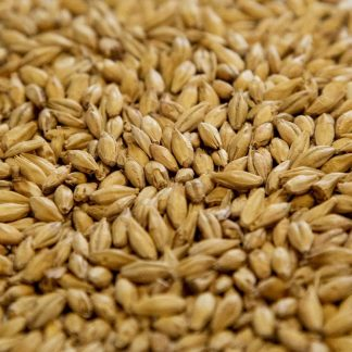 Pilsen Malt Grains Close Up