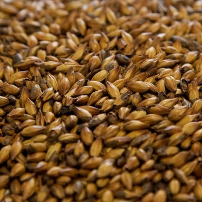 Special B Malt Grains Close Up